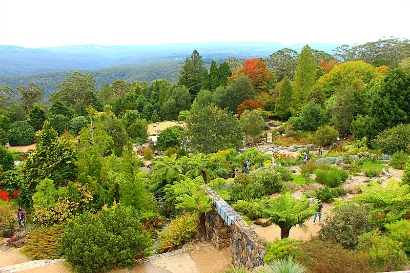 Mount Tomah Botanical Gardens in the Blue Mountains of Australia