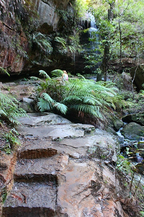 Damp pathway in the other Grand Canyon, located in the Blue Mountains of Australia