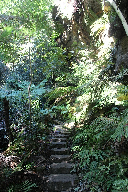 Ferns in the Grand Canyon of Australia's Blue Mountains