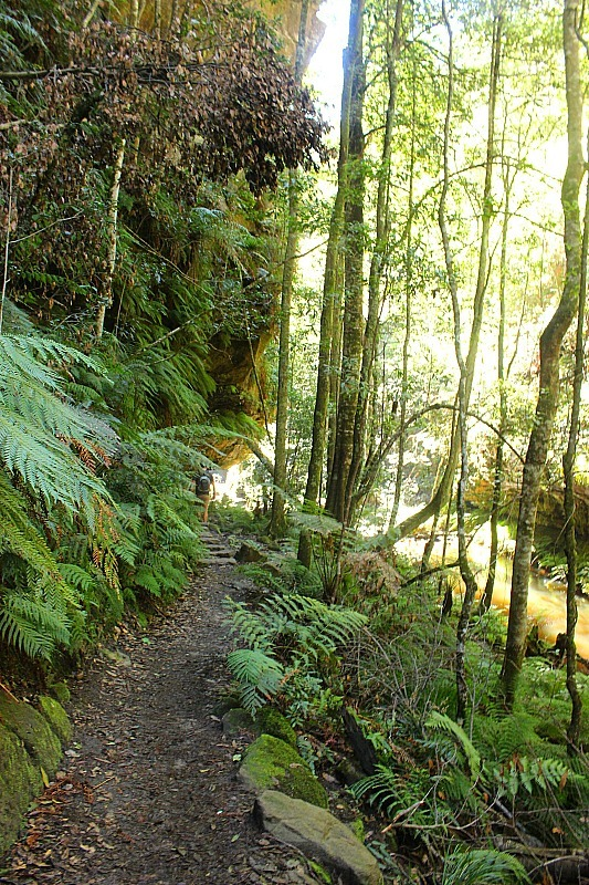 Green everywhere in the Grand Canyon in the Blue Mountains of Australia