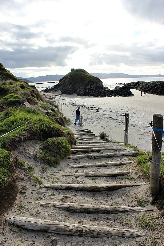Tawharanui beach in Tawharanui Regional Park in North Auckland