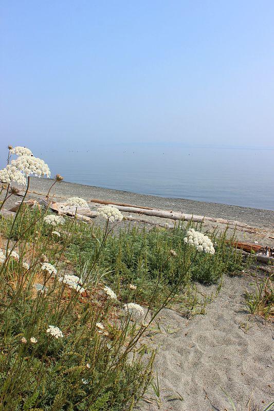 Beautiful beach at Fillongley Provincial Park on Denman Island, Canada