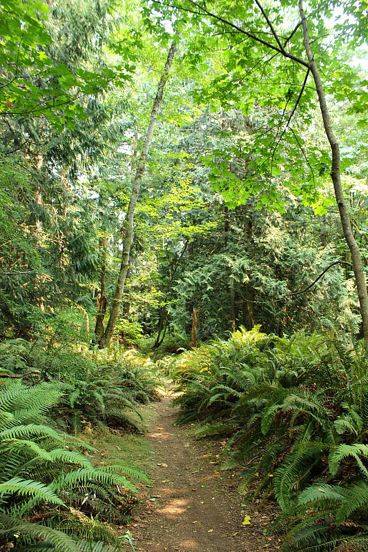 Forest trail on Hornby Island