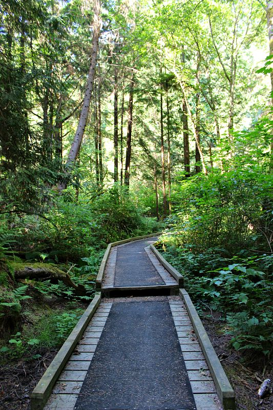 Hiking in Pacific Spirit Regional Park during summer in Vancouver