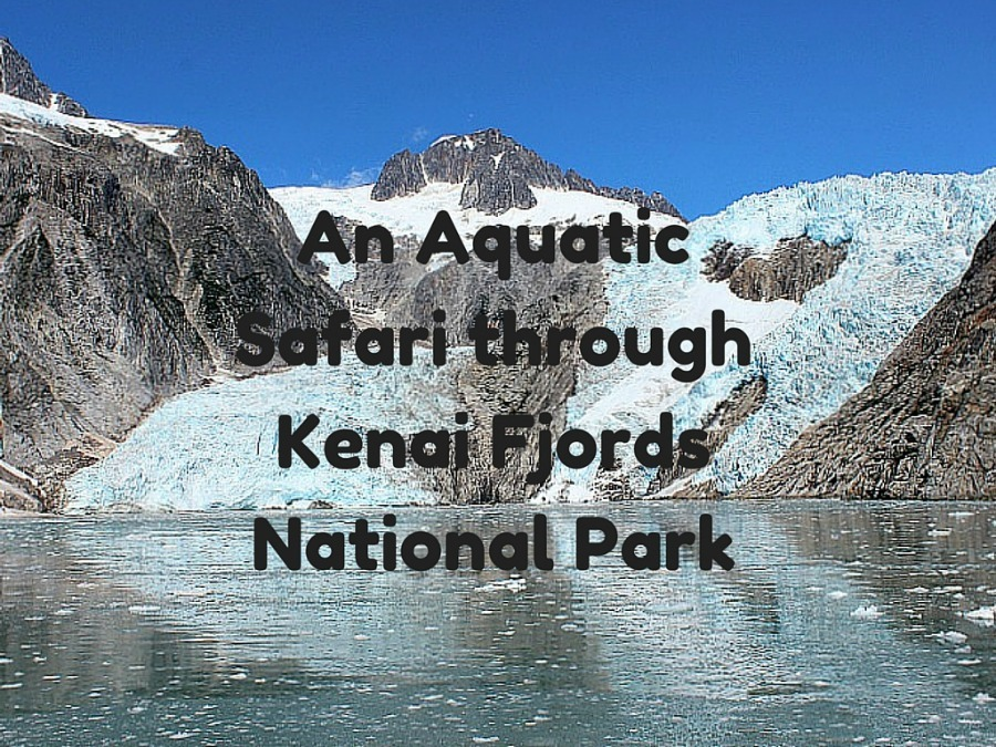 An Aquatic Safari in Kenai Fjords National Park in Alaska