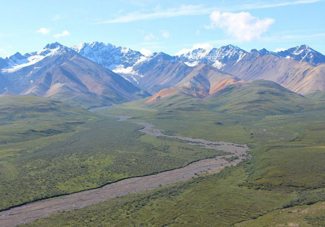 Denali National Park Guide