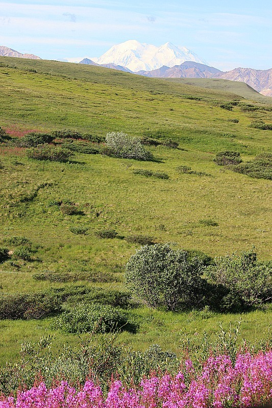 Denali National Park hiking trail