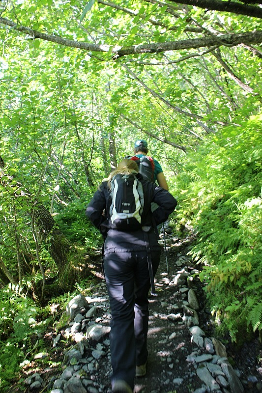 Hiking through temperate rainforest on Harding Icefield trail