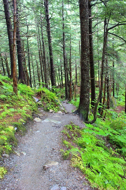 Hiking Mt Roberts near Juneau in the rain