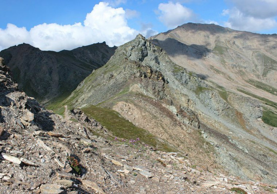 Hiking In Alaska Mount Healy Overlook Trail In Denali National Park