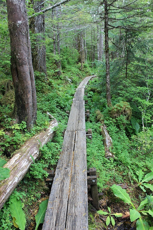 Indian River trail in Sitka Alaska