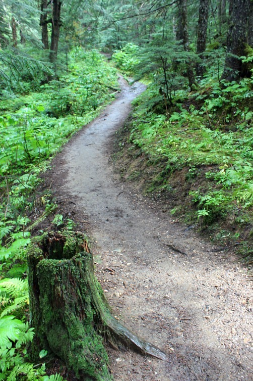 Hiking Juneau in the rain