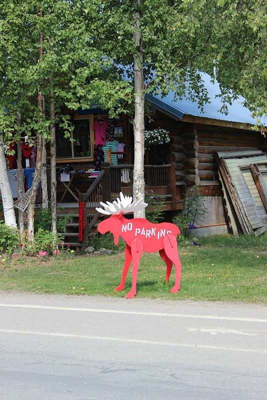 Talkeetna Alaska moose