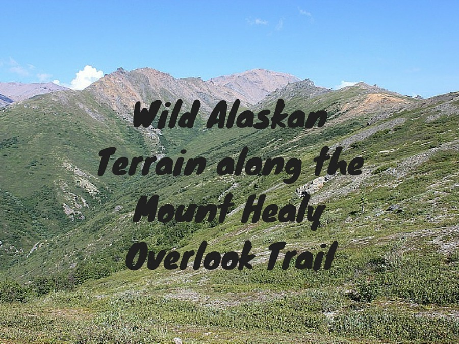 Wild Alaskan Terrain along the Mount Healy Overlook Trail