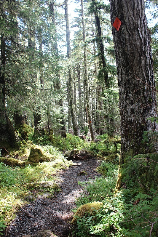 Forested trail on Mount Verstovia - one of the best Sitka Hiking Trails