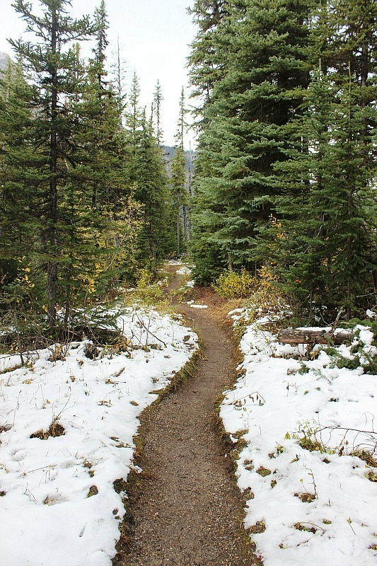 Snow on the trail to Sherbrooke Lake