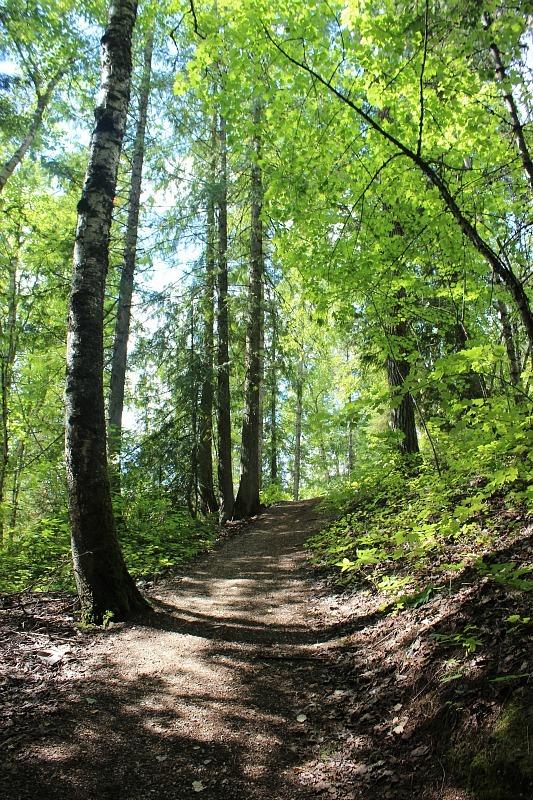 Soren Sorensen trail in Mount Revelstoke NP