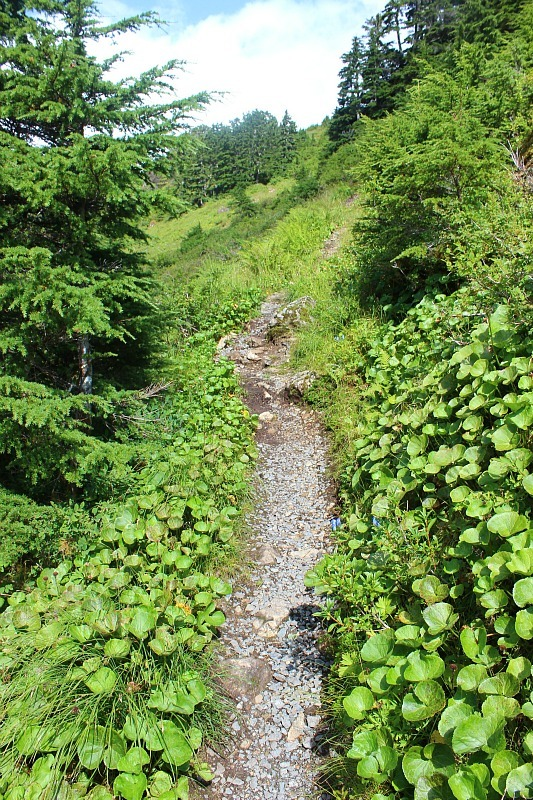 Sub-alpine meadows on Mount Verstovia - one of the best hikes in Sitka, Alaska