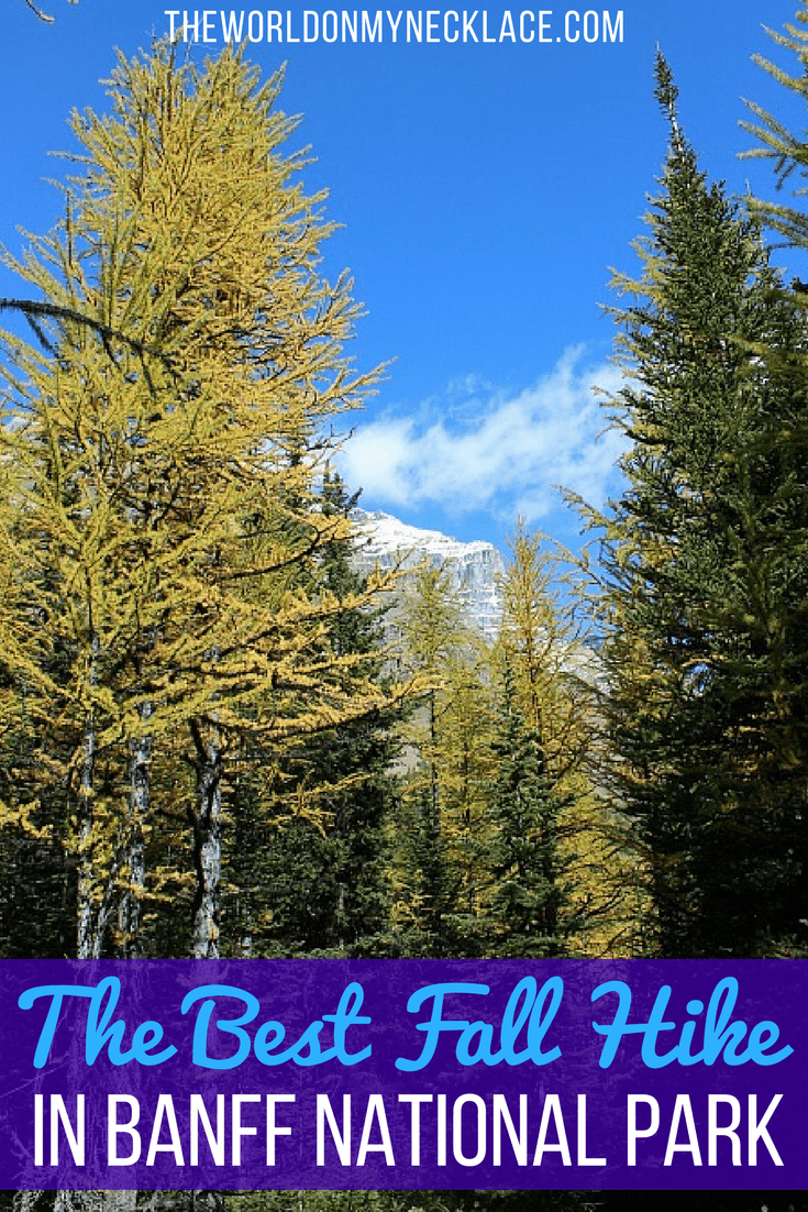 The Best Moraine Lake Hike in Fall - Larch Valley Hike
