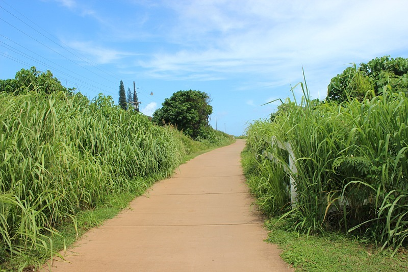 The Kauai Coastal Trail is one of the best easy hikes in Kauai