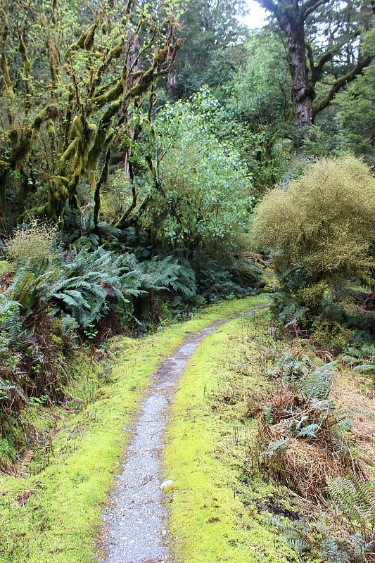 Mossy trail on the Kepler Track