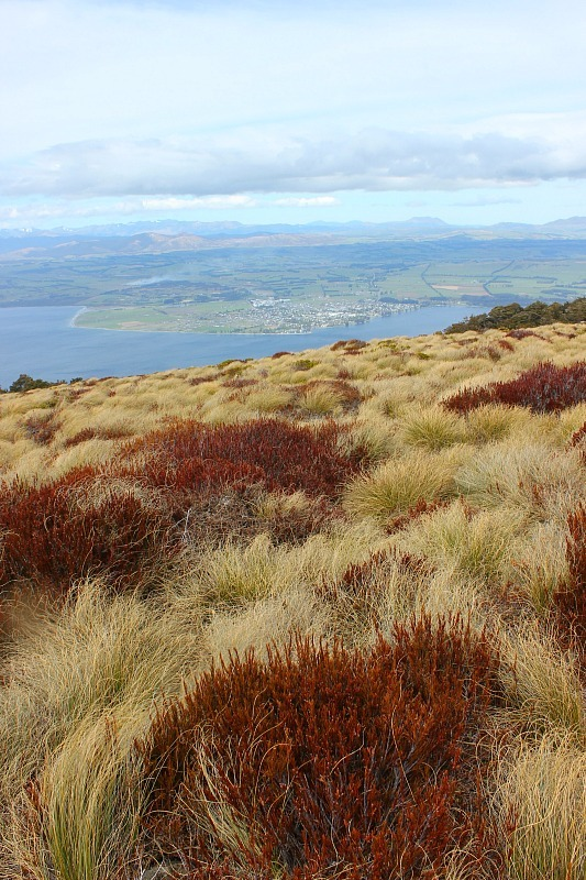 Tussockland overlooking Lake Te Anau on the Kepler Track