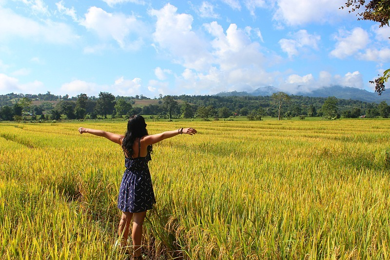 Pai rice paddy
