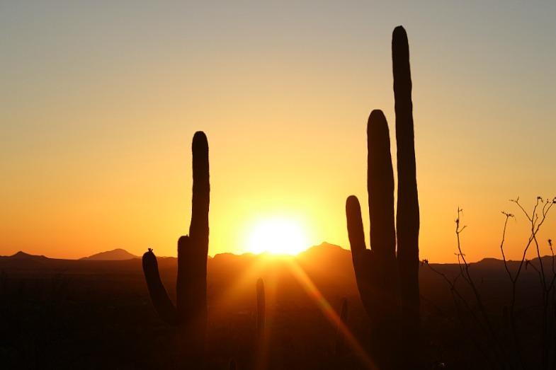 Saguaro National Park at sunset