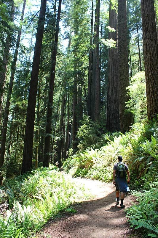 Hiking Redwoods National Park during month 11 of digital nomad life