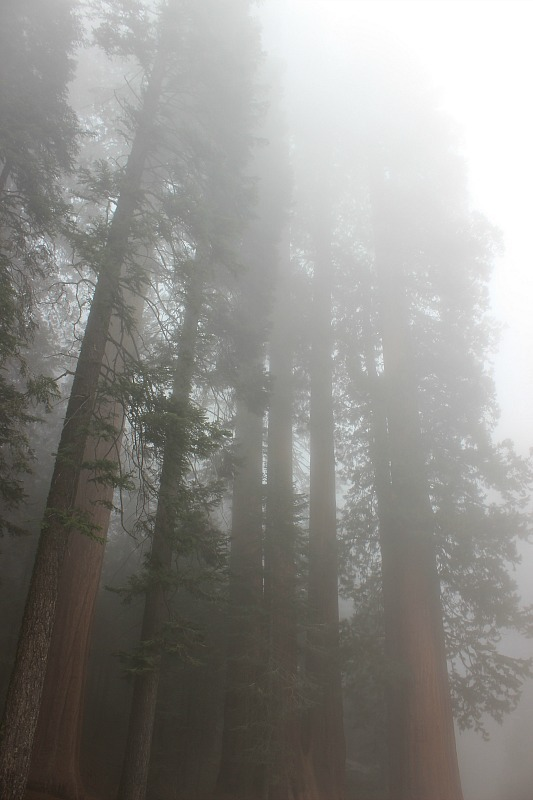 Mist in Sequoia National Park during month 11 of digital nomad life