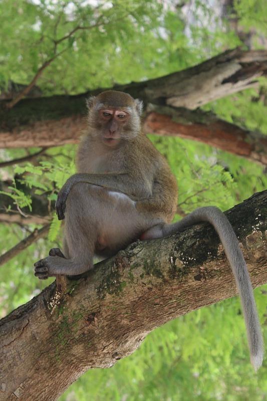 Railay beach monkey