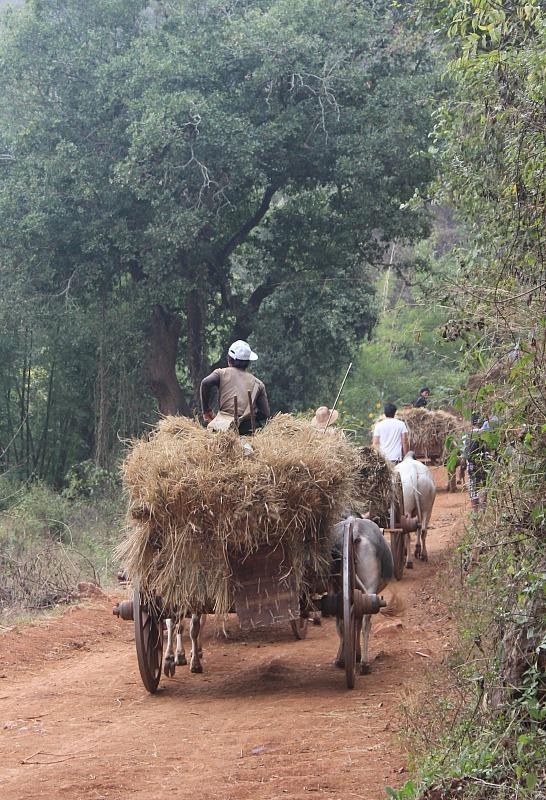 Northern Myanmar traffic jam while trekking from Kalaw to Inle Lake