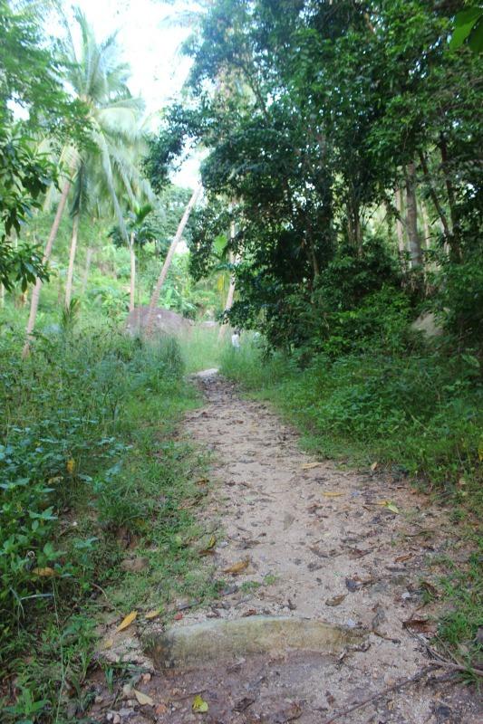 Trail on Ko Tao