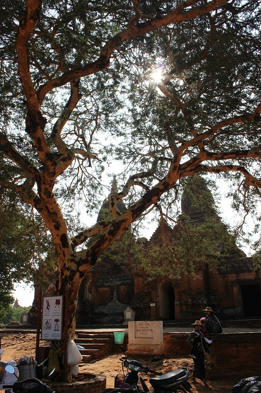 One of the Bagan pagodas shaded by trees