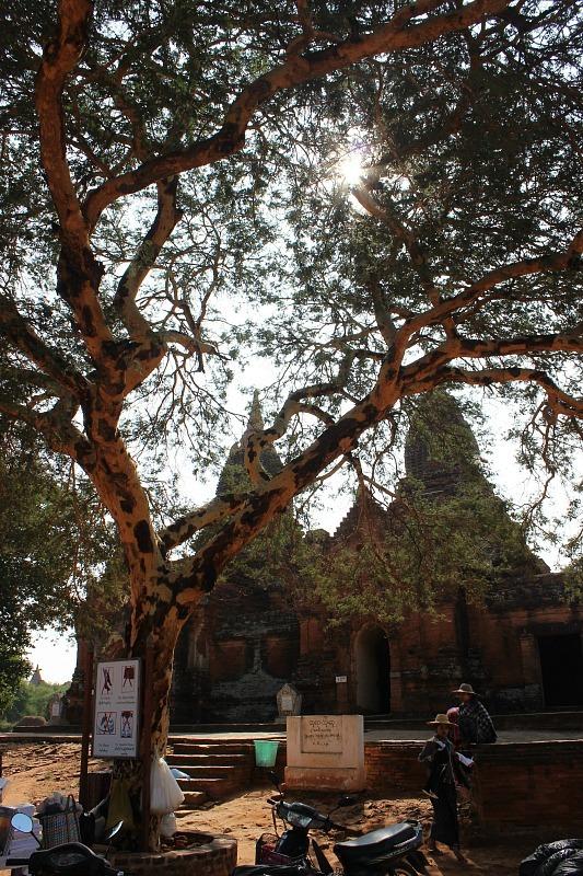 Bagan pagoda shaded by trees