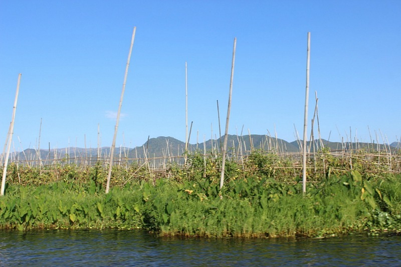 Floating Garden seen from an Inle Lake Boat Tour