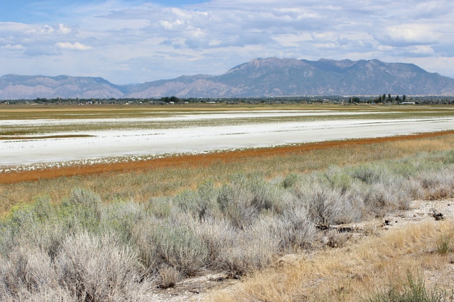 Antelope Island, Utah - one of the 10 best offbeat islands to visit