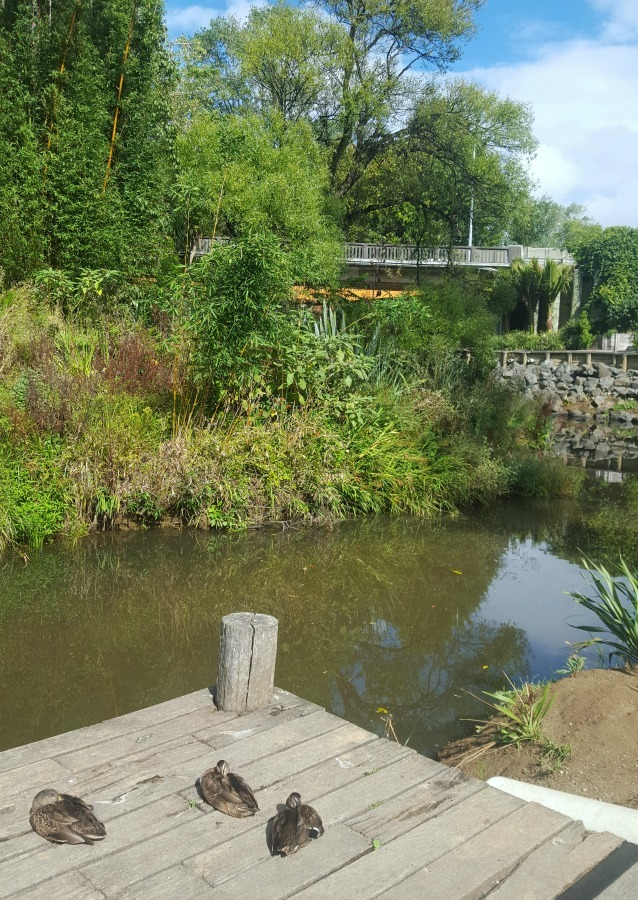 Matakana riverside in Auckland New Zealand - visited during month twenty two of digital nomad life