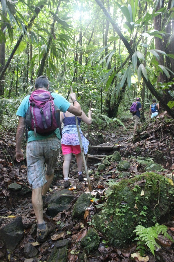 Hiking through the forest to the Boiling Lake, Dominica