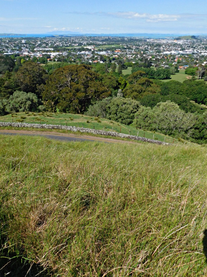 Visiting Cornwall Park during month thirty of digital nomad life