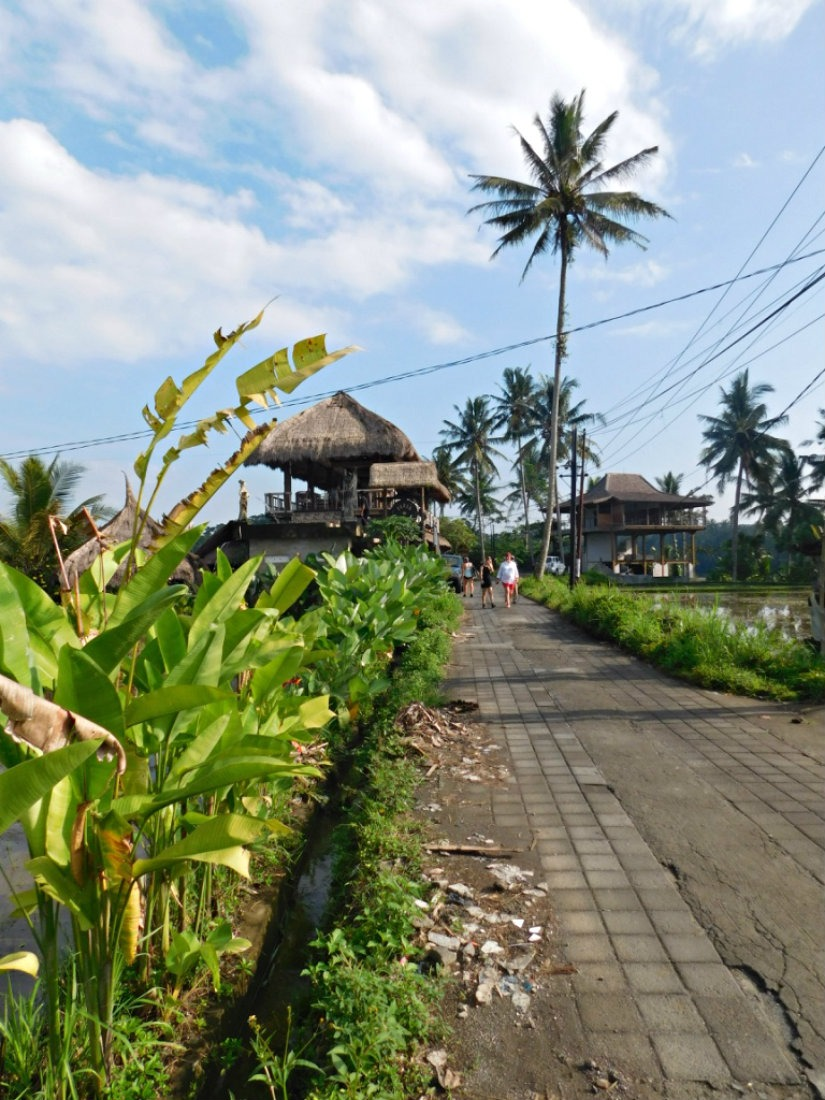 Hiking Campuhan Ridge in Bali during month thirty two and thirty three of Digital Nomad Life