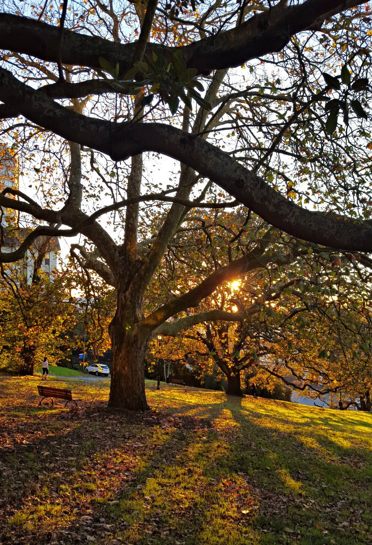 Early morning walks in Auckland - a highlight of month thirty six of digital nomad life