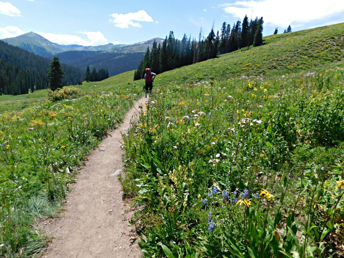 Wildflowers on the hike from Aspen to Crested Butte in Colorado