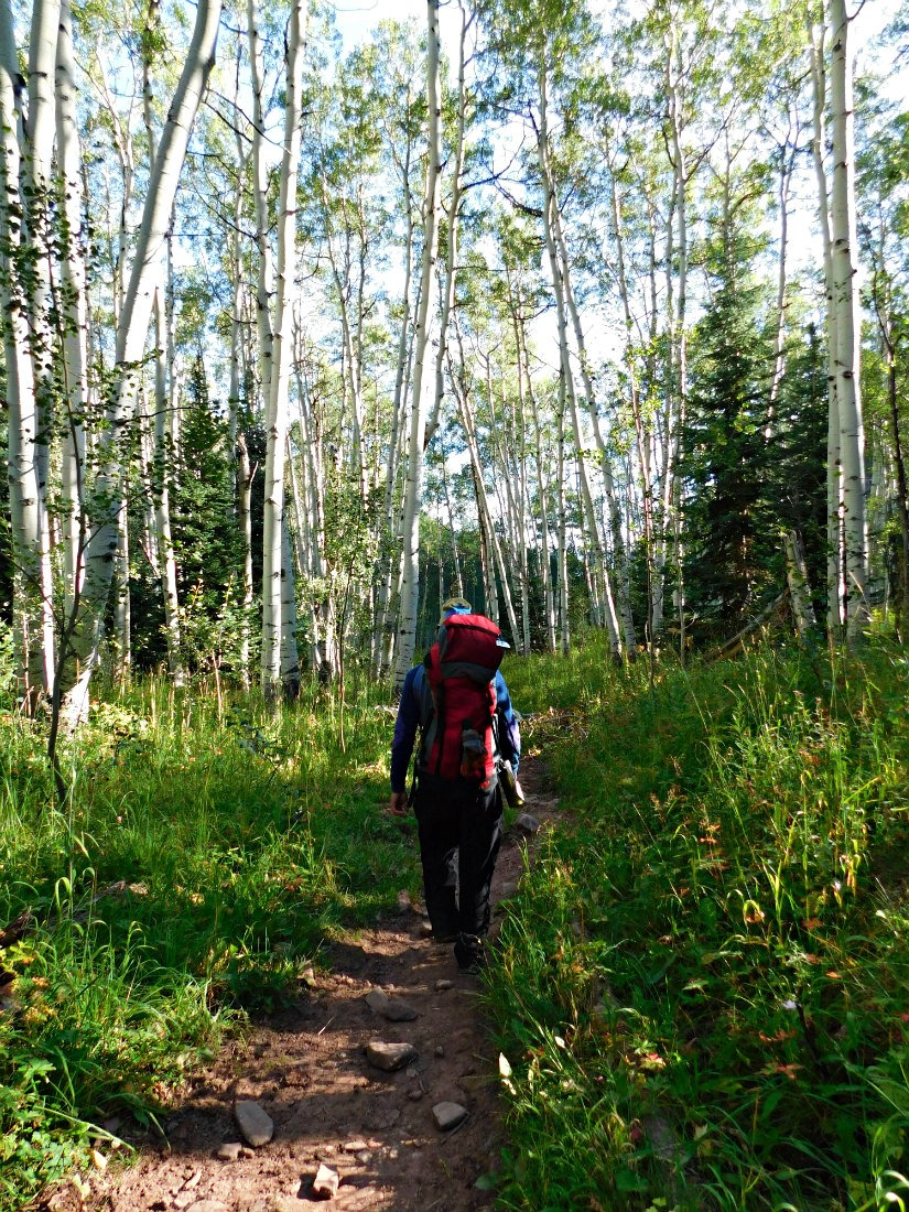 Hiking through an Aspen grove on the East Maroon Pass trail from Crested Butte to Aspen