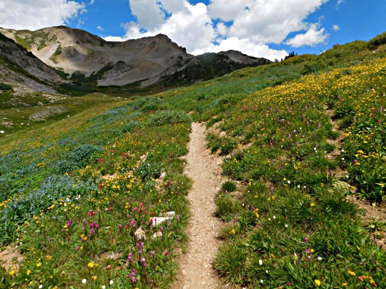 Wildflowers on a hike near Crested Butte, one of the best mountain towns in Colorado