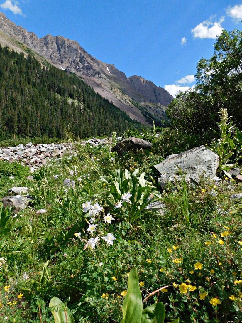 Wildflowers on the hike from Aspen to Crested Butte in Maroon Bells-Snowmass Wilderness