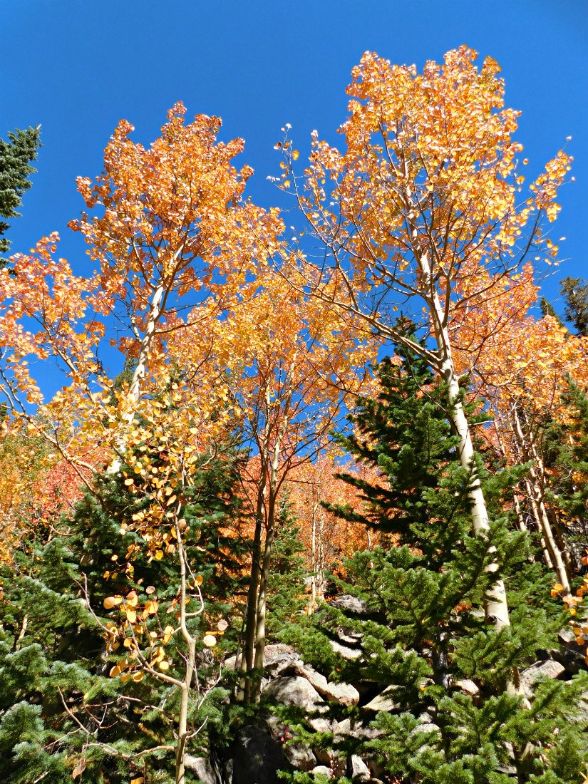 Fall colors in Rocky Mountain National Park, Colorado