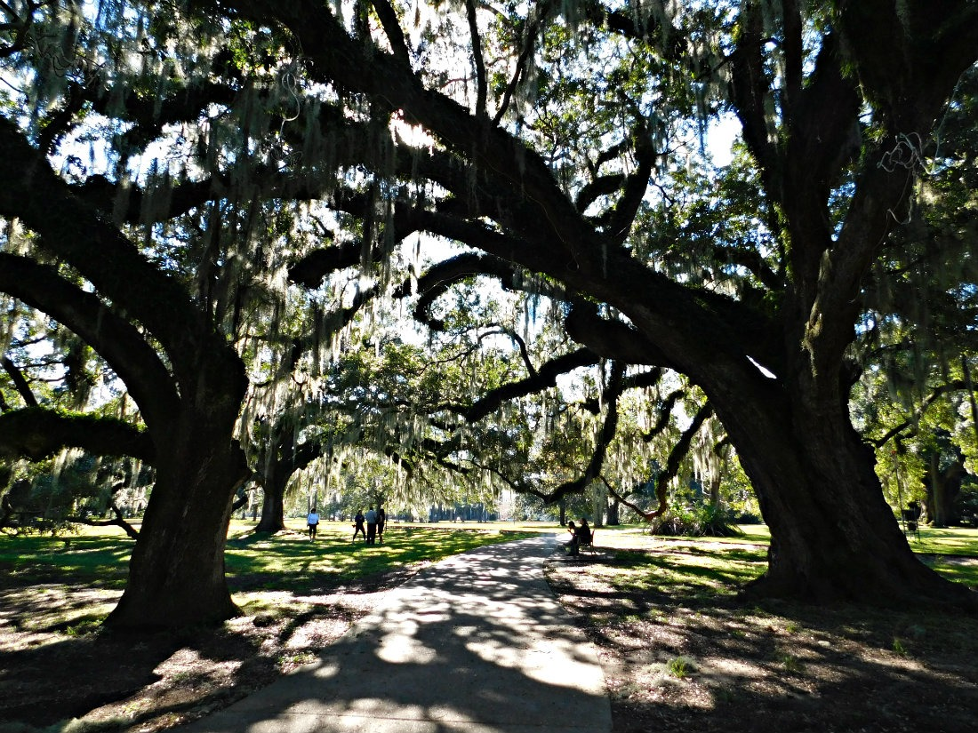 City Park in New Orleans is a must do if you are visiting the Big Easy