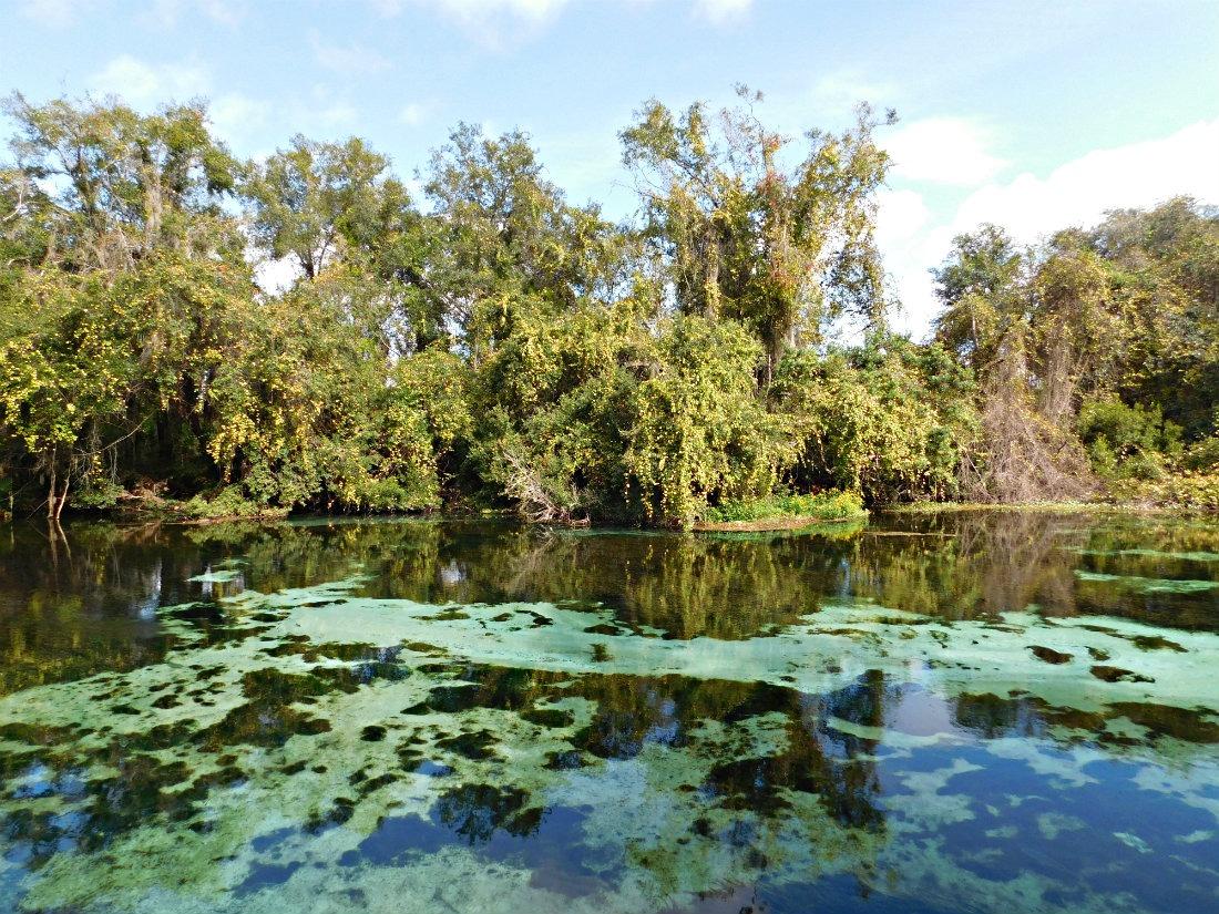 Weeki Wachee River and springs in Florida