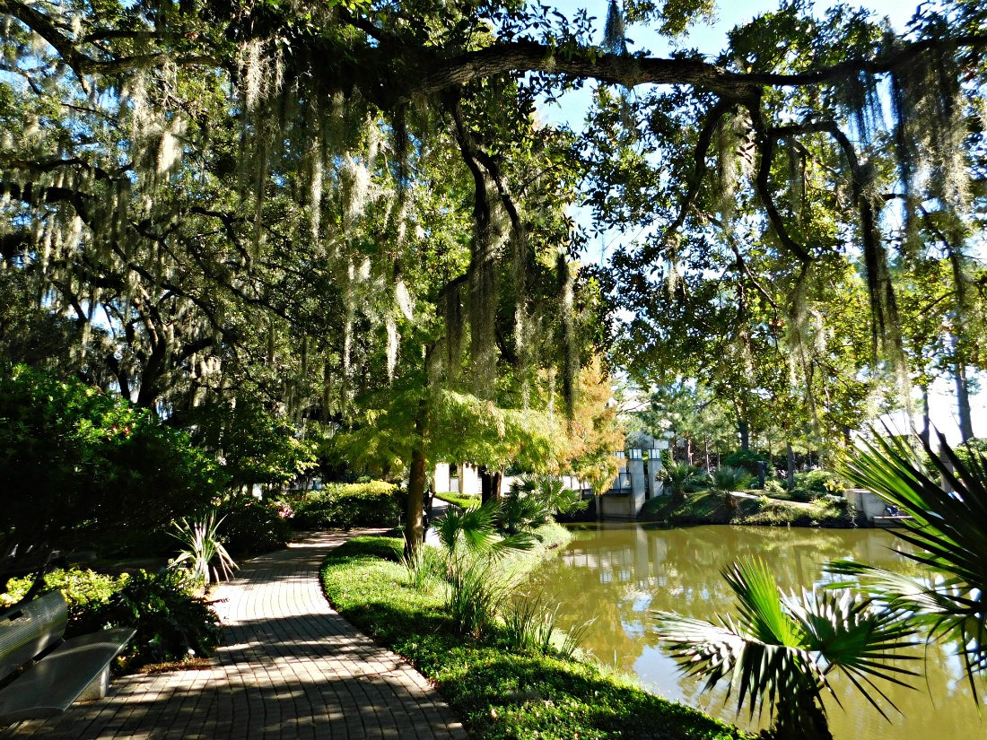 City Park in New Orleans is home to Morning Call Cafe - which does incredible beignets